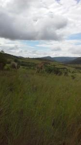 Pretoria Nationalpark