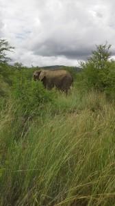 Nationalpark Pretoria